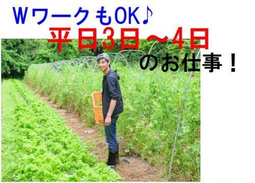 農作業をされていた方には最適!WワークもOKで平日の3日~4日のお仕事です。